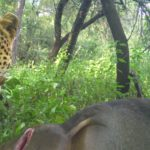 Camera Traps & Conservation